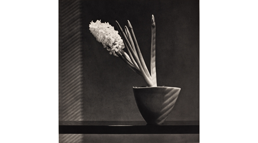 ROBERT MAPPLETHORPE Hyacinth, 1987