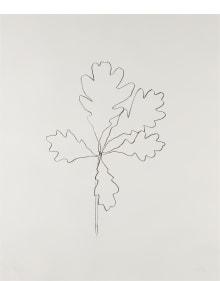 Ellsworth Kelly - Oak I, from Series of Oak Leaves