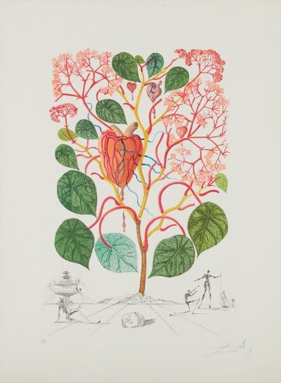 Begonia (Anacardium recordans), from Flordali® (Flora Dalinae)