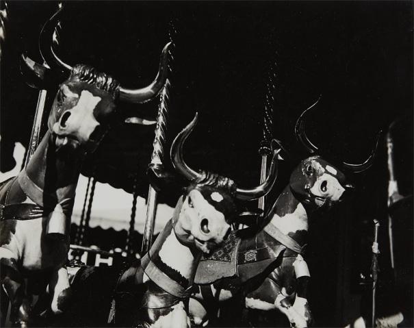 Carousel Cows