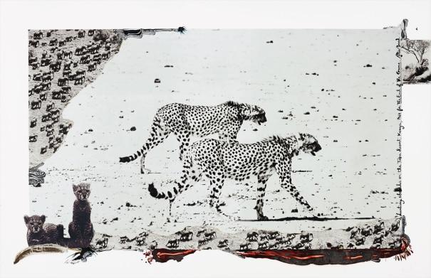 Hunting Cheetahs on the Taru Desert, Kenya, June