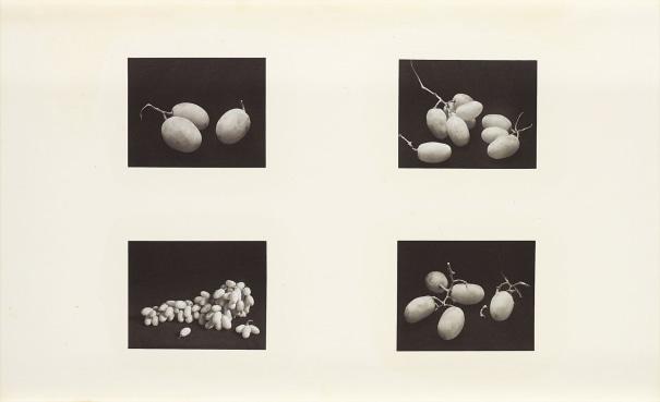 Four Photographs of Grapes (A), New York, Feb