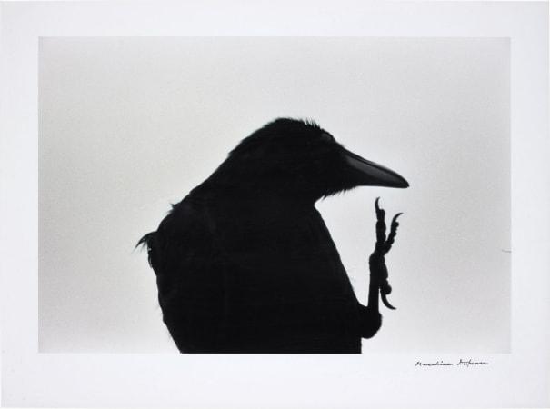 襟裳岬 [Erimo Misaki] Cape Erimo from 鴉 [Karasu] Ravens