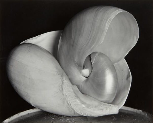 EDWARD WESTON Shells, 1927