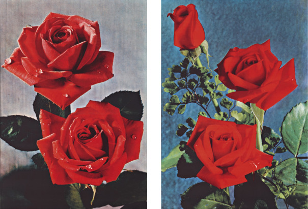 Flower pictures from postcards
