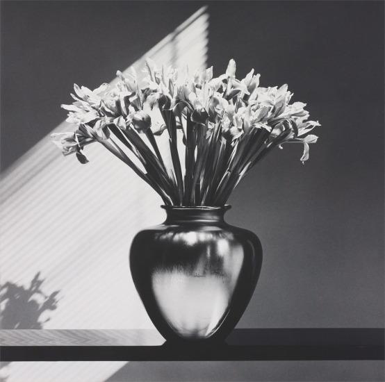 tulips essay