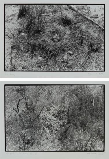 Two works: (i) Nest no. 1; (ii) Nest