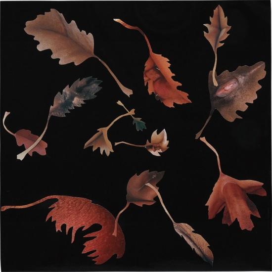Leaf Study 20