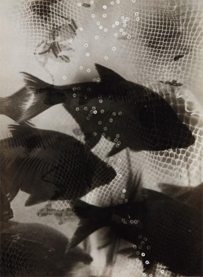 Träumende Fische (Dreaming fish)