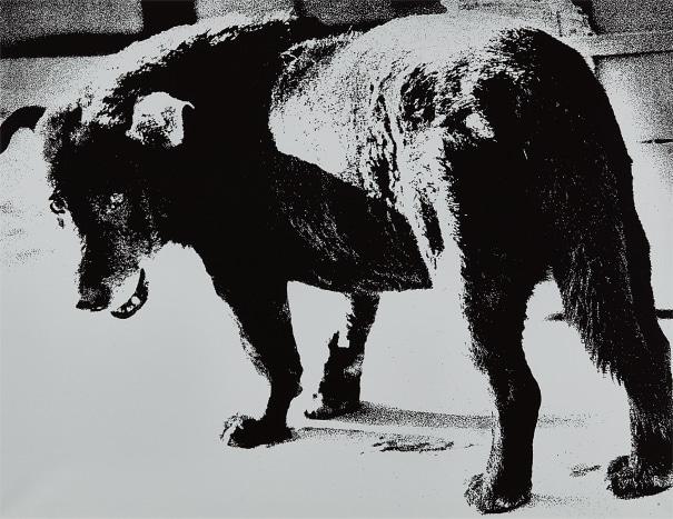 Stray Dog, Misawa, Aomori
