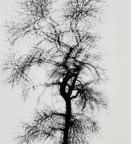 Multiple Exposure Tree, Chicago