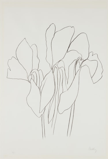 Cyclamen V, from Suite of Plant Lithographs