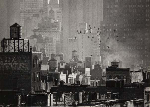 Birds in Flight and Cityscape