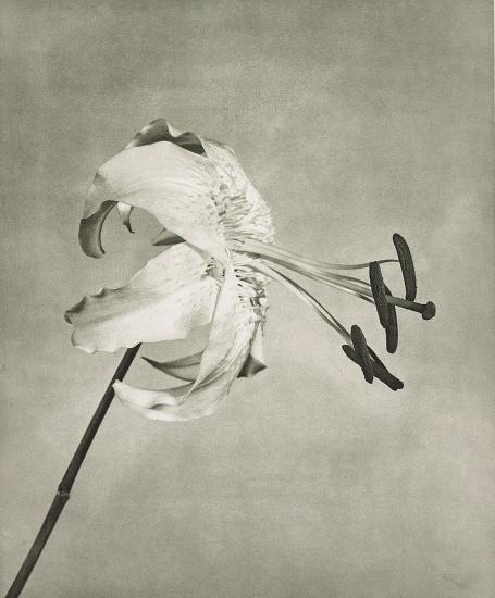 Flowers, 5