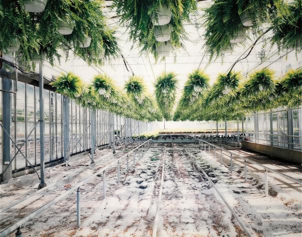 Kas met varens [Greenhouse with ferns]