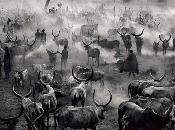 Dinka Cattle Camp of Amak, Southern Sudan