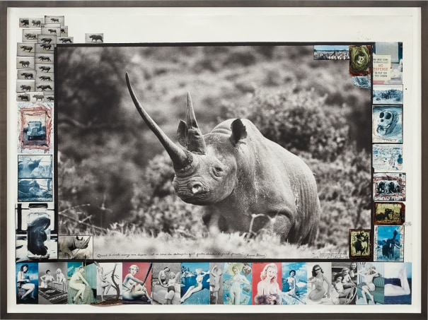 """Ruhuti Valley (Aberdare Forest, Kenya), record-class rhino [circa 47""""] for The End of the Game"""